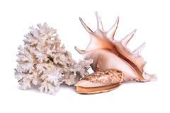 Skład wielka denna skorupa, rozgwiazda i koral, odizolowywa na białym tle Zdjęcia Royalty Free