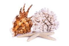 Skład wielka denna skorupa, rozgwiazda i koral, odizolowywa na białym tle Obraz Stock