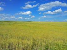 składu łąkowa natury banatka Piękny krajobraz Zdjęcia Stock