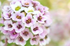 składu kwiatu macro natura obraz stock
