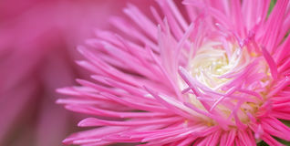 składu kwiatu macro natura zdjęcie stock