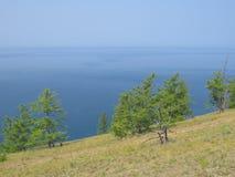Skłon wzgórze, rzadkie sosny, widok jezioro Krajobrazowa Olkhon wyspa zdjęcie stock
