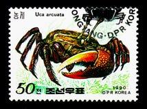 Skłoniony skrzypacza kraba Uca arcuata, kraba seria około 1990, obraz stock