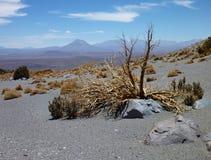 Skłony wokoło wulkanu isluga przy chilean altiplano Obraz Stock