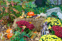 Skład dla wakacyjnego Halloween, Chicago, Illinois Zdjęcia Stock
