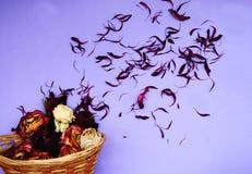 Skład kwiaty Zdjęcia Stock