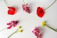 Skład z maczkami i innymi wildflowers Zdjęcia Stock