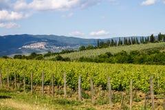 składu krajobrazowy natury winnica Obraz Stock