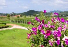składu krajobrazowy natury winnica Zdjęcie Royalty Free