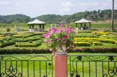 składu krajobrazowy natury winnica Fotografia Royalty Free
