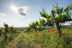 składu krajobrazowy natury winnica Obrazy Royalty Free