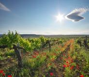 składu krajobrazowy natury winnica Obrazy Stock