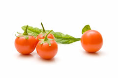 składu pomidor Obraz Stock