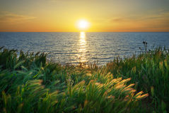 składu trawy zielonego morza nieba zmierzch Obraz Stock