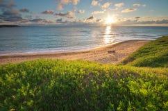 składu trawy zielonego morza nieba zmierzch Zdjęcia Stock