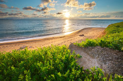 składu trawy zielonego morza nieba zmierzch Zdjęcie Stock