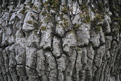 Sk?ll av en tree arkivbild