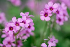 Sk?nheten av blomman arkivfoto