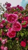 Sk?nheten av blommorna h?rliga blommor arkivbilder