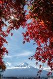 Sk?nheten av Mount Fuji arkivfoton