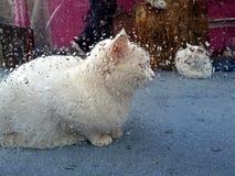 Sk?pbil katt fotografering för bildbyråer