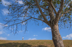 Skłon wzgórze obok campingowego terenu Doi Samer Dao w Nan prowinci, Tajlandia Zdjęcie Stock
