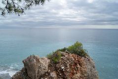 Skała i sosny na plaży zdjęcia royalty free