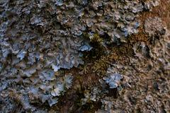 Skała, liszaj, mech tło i tekstura, i Mechaty kamienny tło Abstrakcjonistyczna tekstura i tło dla projektantów Obrazy Royalty Free