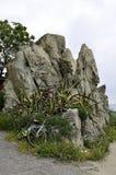 Skała morzem z agawy rośliną Fotografia Stock
