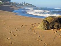 Skała na plaży i odciski stopy na piasku Zdjęcie Royalty Free