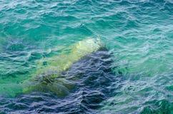 Skała pod jasną wodą zdjęcie royalty free