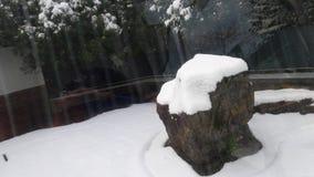 Skała w śniegu fotografia stock