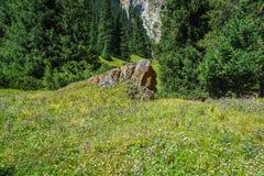 Skała zakrywająca z pomarańczowymi liszaju i łąki kwiatami Zdjęcie Stock