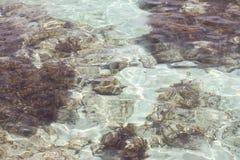 Skały, gałęzatka i piasek na dnie morskim, obraz royalty free
