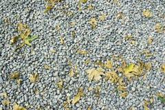 Skały i liścia tekstura Zdjęcie Stock