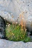 Skały i roślinność na Doolin plaży, okręg administracyjny Clare, Irlandia Obrazy Stock