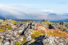 Skały na wybrzeżu fjord na Iceland Zdjęcie Stock