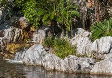 Skały, rośliny i siklawa, fotografia royalty free