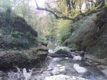 Skały, rzeka i roślinność, obraz royalty free