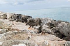 Skały wzdłuż morza Obrazy Royalty Free