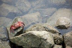 skała kraba zdjęcie royalty free