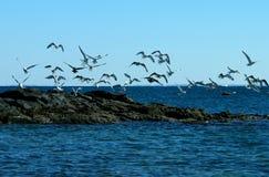 skała mewy morza Fotografia Royalty Free