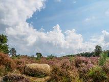 Skała na wzgórzu w heathland Zdjęcia Royalty Free