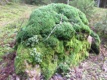 Skała z zielonym mech i liszajem Fotografia Royalty Free