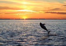 1 skaczący delfinów Obraz Royalty Free