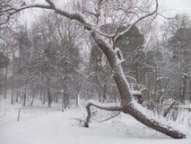 Skaczący Drzewny Sztokholm, Szwecja Obraz Royalty Free