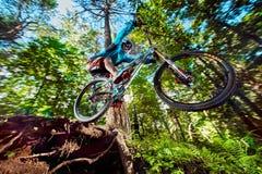 Skacze i lata na rowerze górskim w lesie Zdjęcia Royalty Free