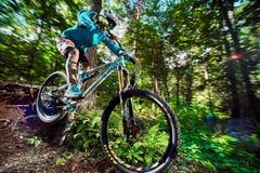 Skacze i lata na rowerze górskim w lesie Obrazy Stock