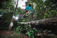 Skacze i lata na rowerze górskim w lesie Obrazy Royalty Free