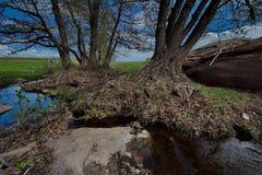 Skacze na rzekach park narodowy Bayanaul Zdjęcia Royalty Free